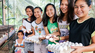Cebu farmland's hen house project now producing 1000+ eggs weekly; case study of at-risk girl benefitting from 'Hope Center' education program | by Peace Gospel