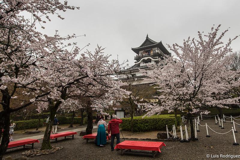 El castillo de Inuyama, especialmente bonito durante la floración de los cerezos
