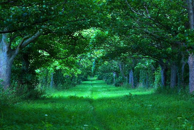 Shades of Green~