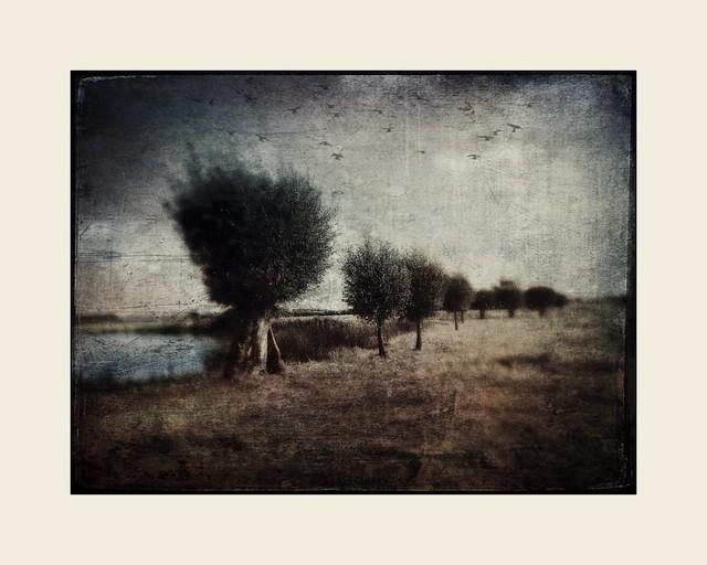Dutch landscape with lake II