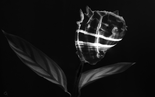 BW abstract flower