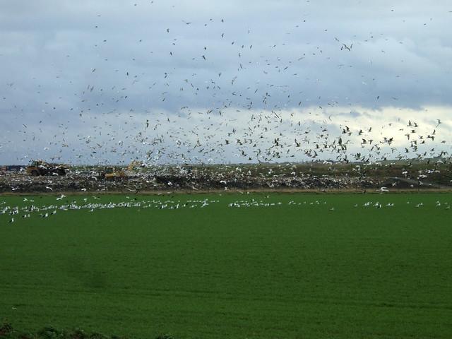 Barling Marsh