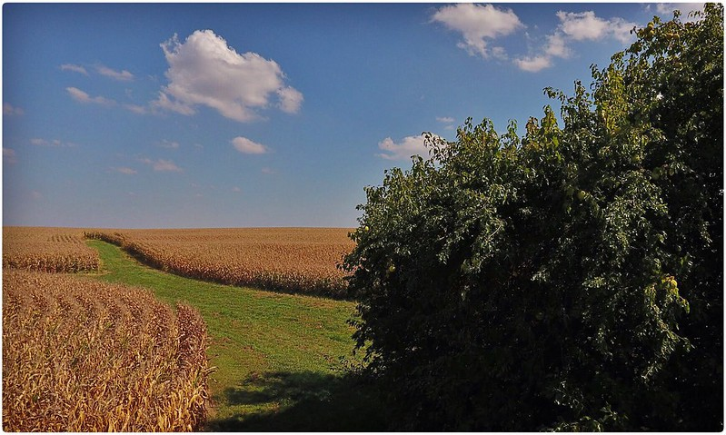 Illinois Prairie. Aerial Photography