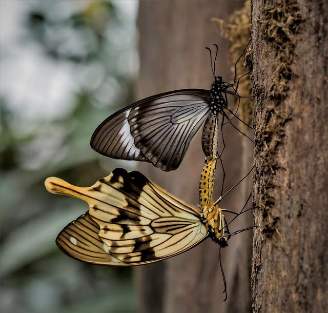 Schmetterlings.....Vereinigung