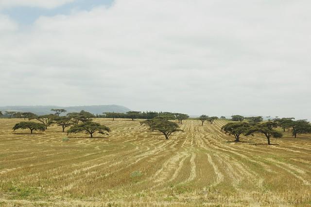 Maasai Mara 1 8