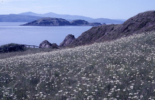 Conopodium meadow at broad end of dyke on Easedale Island. Insh and Mull beyond. 1986