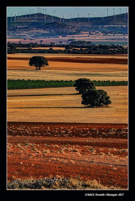 Colors d'estiu a la Manxa 17 (La Mancha summer colours) Corral-Rubio, la Mancha de Montearagón, Albacete, Spain