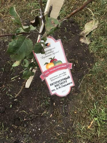 Окт 1 2017 - 12:24 - яблоня от лита