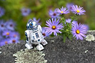 fall flowers   by Mark Bonica