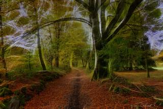 """foto de Paysage d'automne   """"L'automne est le printemps de l'hiver.""""…   Flickr"""