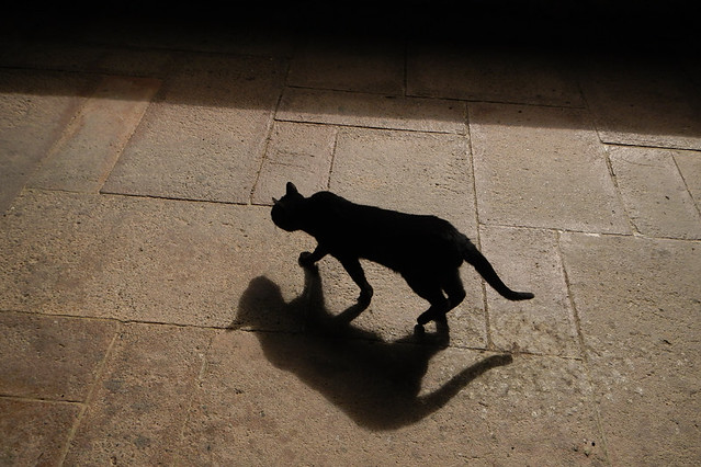 A small black cat and his shadow tread softly across the sun-lit plaza of Valvanera, an 11th century monastery in Spain