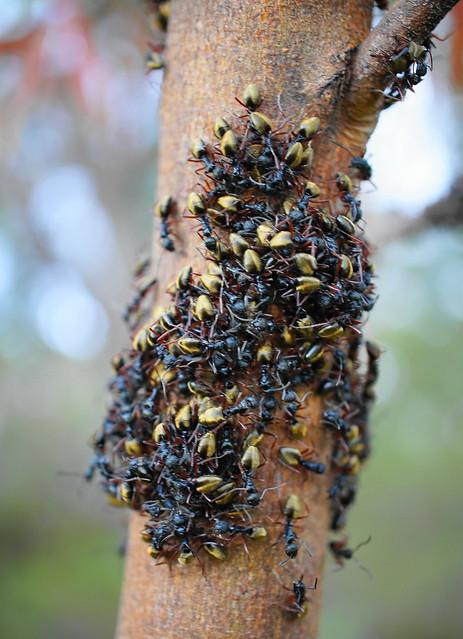 lotta ants