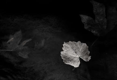 southumpquariver oregon i5 tricity surprisevalley monochrome bw blackandwhite leafart leaves stillwater autumn sonyilce9 fe2470mmf28gm october 2017 alvinharp