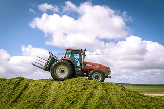 Rolling the silage stack for storage
