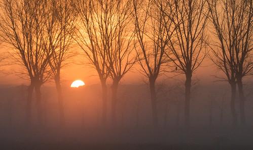 middendelfland bird dawn orange smileonsaturday sunrise tree vividorange nederlandvandaag