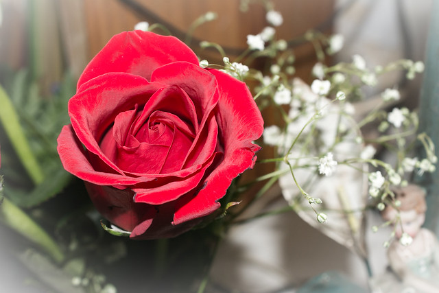 Feliz dia a todas Madres de la comunidad de FLIKR - Happy day to all Mothers of the FLIKR community