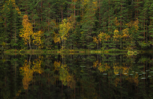 autumn colors colorful forest pond reflection yellow green pine tree trees water leaves landscape luukki espoo finland nature woods woodland birch