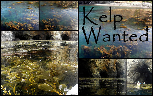 Kelp Wanted | by FreeWine