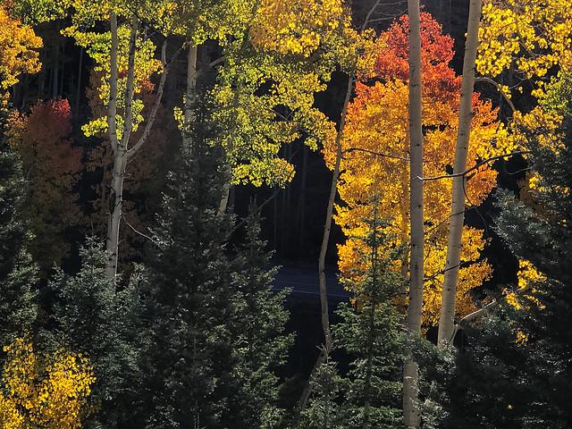 hyde park road autumn color