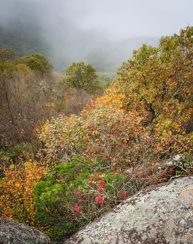 autumn x100f foggy nature panorama fall fujifilm rocks trees shenandoah marysrock virginia forest fog fuji naturaleza park otoño va pano mountain luray unitedstates us