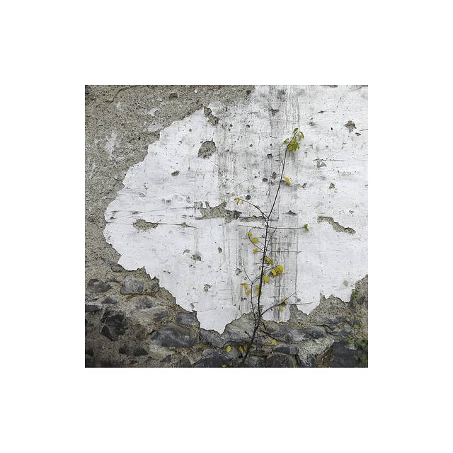 The plant.   ( Navarra )