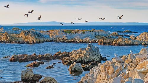 pacificgrove montereypeninsula california ca united states usa oceanviewblvd sea rocks coastline shoreline seaside waves birds