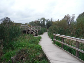 Boardwalk through Wetlands and Viewing Platform, Morden Hall Park SWC Walk Short 13 - Morden Hall Park and Merton Abbey Mills
