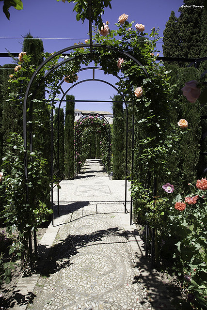Paseo entre rosas - Granada