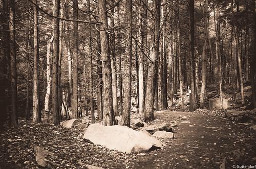 Ricketts Glen Black & White