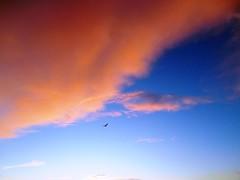 cloudbird