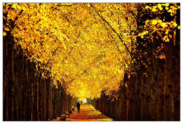Goldener Herbst – golden autumn