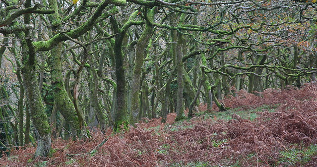 Quantock Hills - One of Three