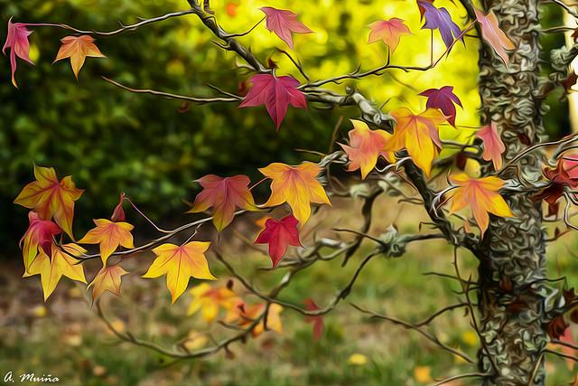 Explosion of autumn colors. Explosión de colores otoñales