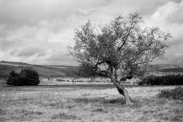 FILM - Trees at Longshaw