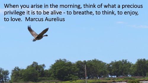 Marcus Aurelus | by aafromaa