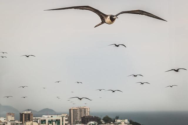Birds over a cloudy Ipanema