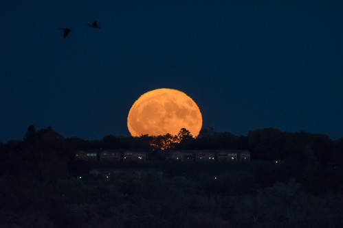 harvest moon rise moonrise october fall trees evening dusk night full astronomy sky heavens up rising glow glowing