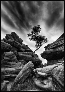 IN_02_Lone Tree Brimham_95