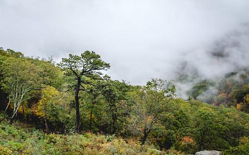 autumn x100f foggy arbol nature fall fujifilm wet trees shenandoah tree forest rainy fuji naturaleza otoño fog va virginia park luray unitedstates us