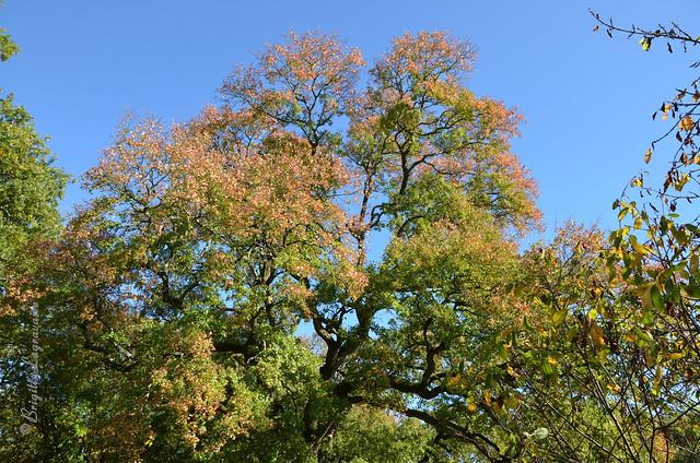 L'automne dans l'azur