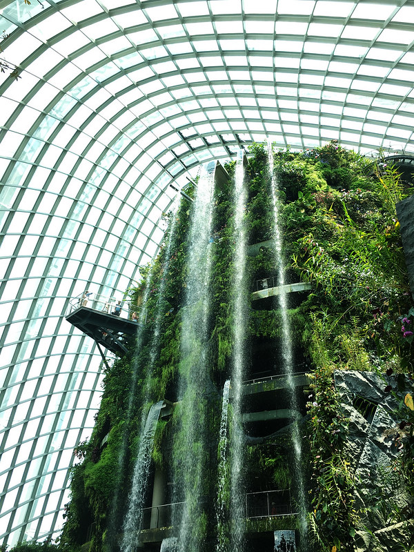 Cloud Forest Waterfall