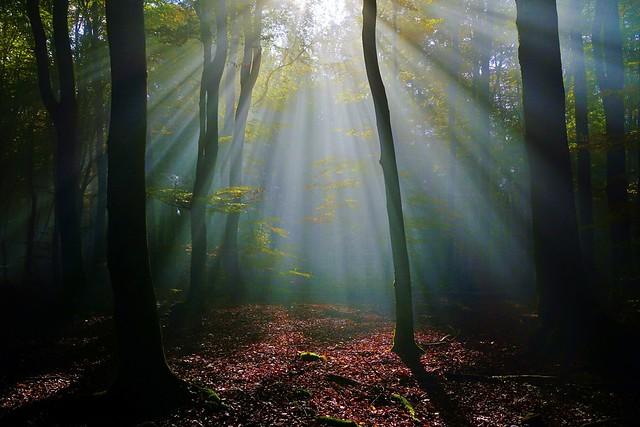 Es werde Licht! Let there be light!