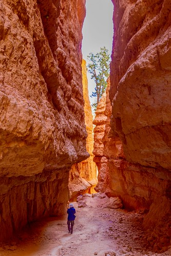 navajolooptrail utahscene utahscenery utahlandscapes southeasternutah hiking hoodoos brycecanyon nationalpark hikingtrail navajoloop bryce utah unitedstates