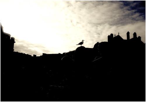 buildings bird silhouette