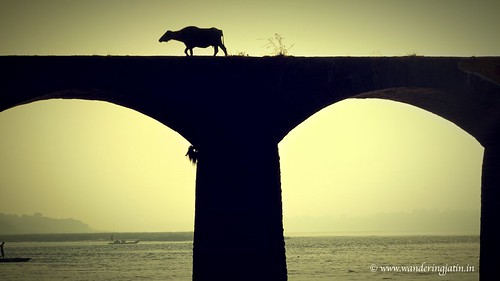 Buffalo over bridge | by wanderingjatin