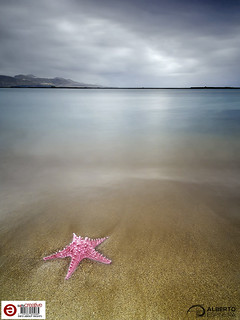 What if there were starfish in Las Canteras? (Synthetic resin starfish) 04 | by Alesfra