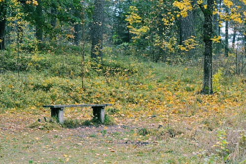 < bench in the forest >   by Mister.Marken