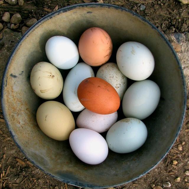 Rainbow eggs squared