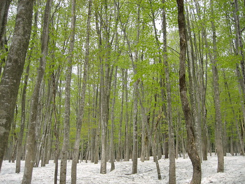 forest geotagged nigata echigotsumari geolat371003231 geolon1386176497