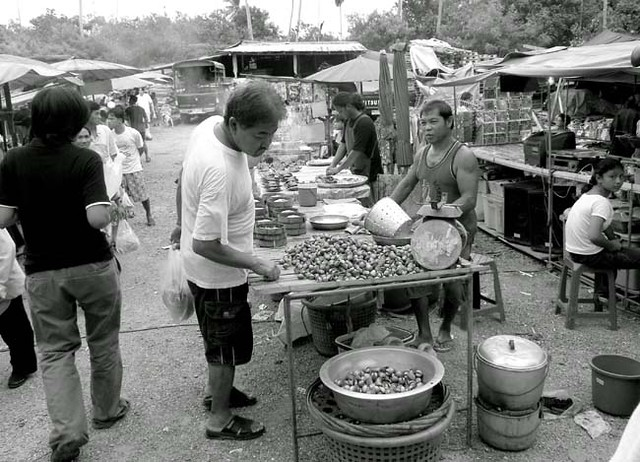 bangkrachow191